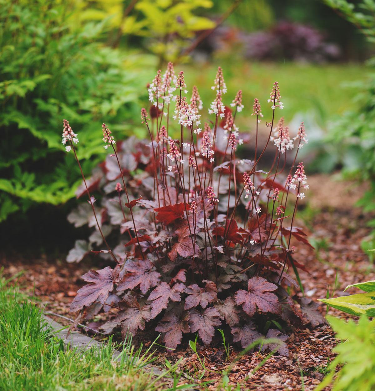 Best Cut Flowers for Shady Gardens - Longfield Gardens