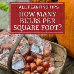 Fall Planting Tips: How Many Bulbs Per Square Foot?