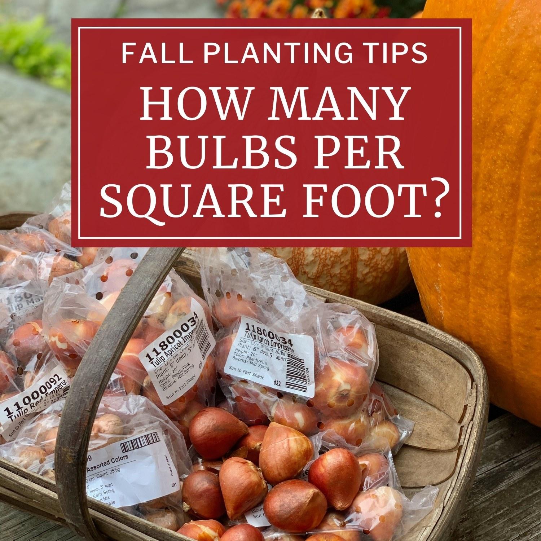 How Many Bulbs Per Square Foot - Longfield Gardens